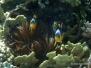 Ägypten Unterwasser