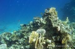 aegpyten-unterwasser-1