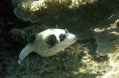 aegpyten-unterwasser-10