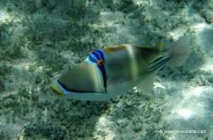 aegpyten-unterwasser-11