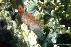 aegpyten-unterwasser-2