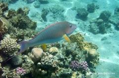 aegpyten-unterwasser-3