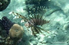 aegpyten-unterwasser-6