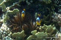 aegpyten-unterwasser-8