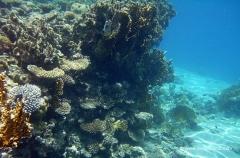 aegpyten-unterwasser-9