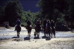 pferde-argentinien
