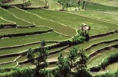 bali-landschaften