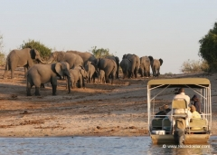 chobe-nationalpark-elefanten