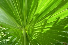 pflanzenwelt_british_virgin_islands