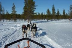schlittenfahrt_finnland