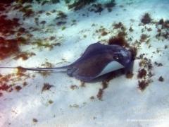 karibik-schnorcheln