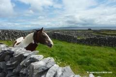 irland-pferd-landschaft