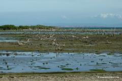 isla_margarita_mangroven