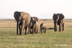 amboseli-nationalpark-elefanten