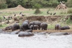 flusspferd-nilpferd-kenia