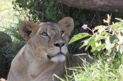 loewe-kenia