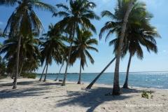 kuba-palmenstrand