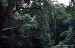 malaysia-taman-negara-nationalpark