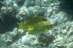 malediven-unterwasser