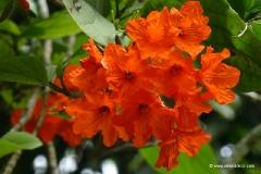 mauritius-sehenswuerdigkeiten