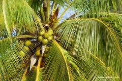 palmenstrand-mauritius