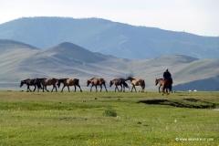 pferde_mongolei_reiten