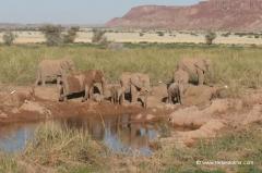 namibia-wuestenelefanten