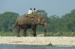 elefant-chitwan-nationalpark
