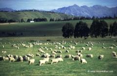 neuseeland-urlaub