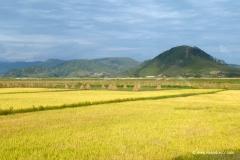 reisfelder_nordkorea