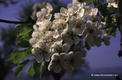 oesterreich-fruehling