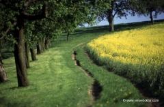 oesterreich-landschaft