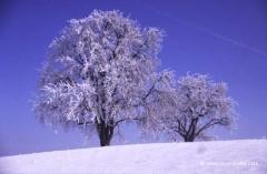 schnee-oesterreich-winter