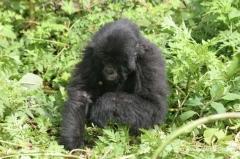 ruanda-rundreisen