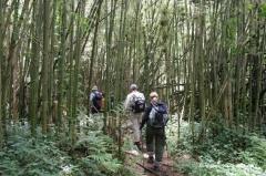 ruanda-wanderung-berggorillas
