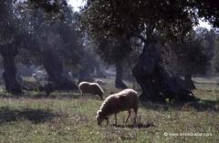 mallorca-gruppenreisen
