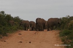 suedafrika-addo-nationalpark