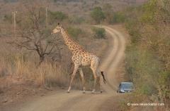suedafrika-rundreisen