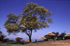 suedafrika-studienreise