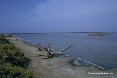 strand-camargue