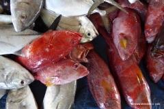 fischmarkt-sulawesi