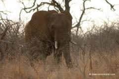 elefanten-swaziland