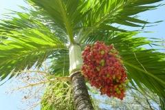 botanischer_garten_tobago