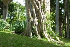 tobago_botanischer_garten