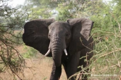 uganda-nationalpark