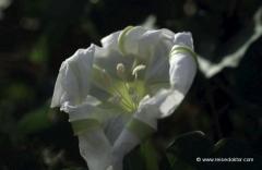 florida-blume