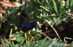 florida-nationalpark-everglades