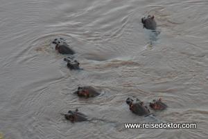 Ballonfahrt Kenia, Flusspferde