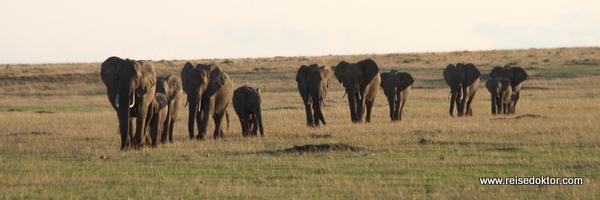 Elefanten in Kenia, Masai Mara