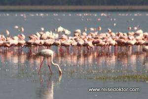 Flamingos im Lake Nakuru Nationalpark